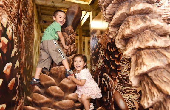 日本森林迷宮+星空度假營