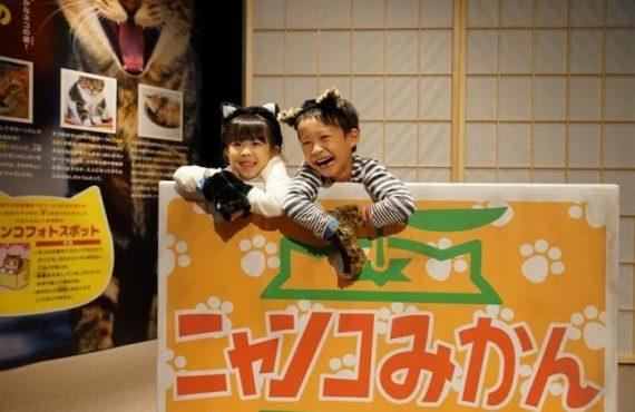 日本限定‧兒童「扮貓」樂園