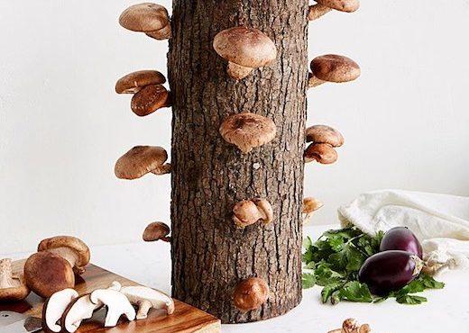 自家種香菇‧親子健康餐